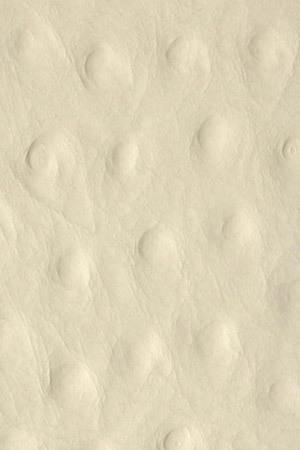 13401 Struzzo creme