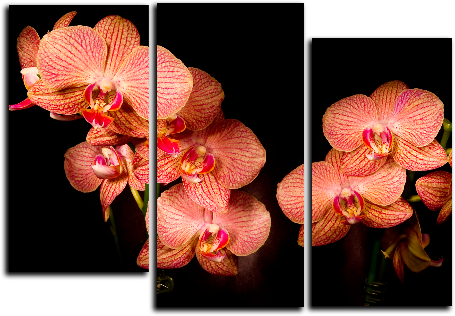 "Цветы Модульная картина ""Ночные цветы"" М694.png"