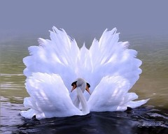 Алмазная Мозаика + Багет 40x50 Объятия лебедей