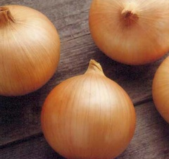 Кэнди F1 семена лука репчатого (Seminis / Семинис)