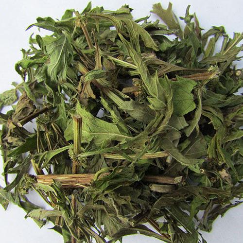 Травы Зюзник европейский lycopus-269.jpg