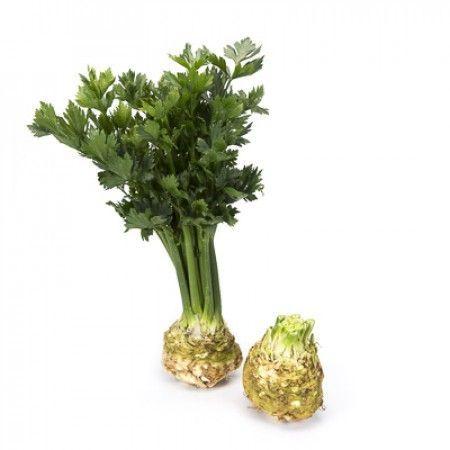 Сельдерей Президент семена сельдерея (Rijk Zwaan / Райк Цваан) ПРЕЗИДЕНТ_РЗ__2_семена_овощей_оптом.jpg