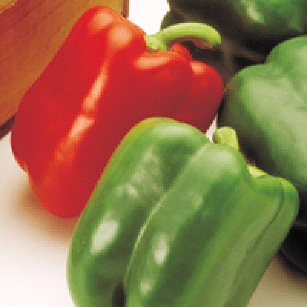 Перец Аристотель ЭКС 3 Р F1 семена перца сладкого (Seminis / Семинис) Аристотель_Экс_3Р_семена_овощей_оптом.jpg