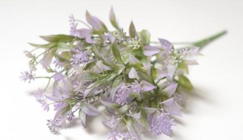 Мелкоцвет фиолетовый