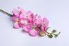 Светло-розовая орхидея.