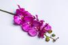 Ярко-малиновая орхидея.