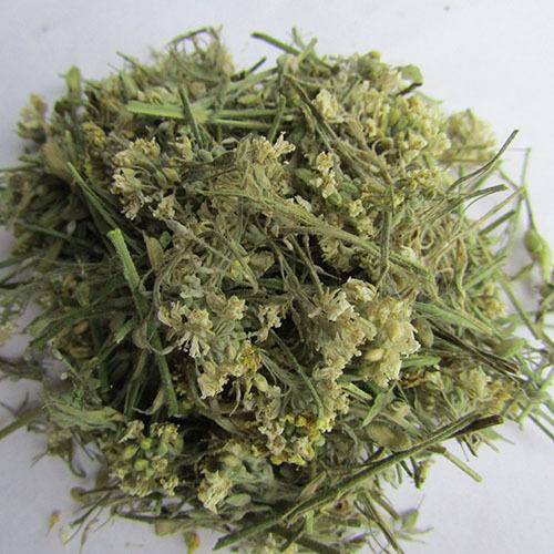 Травы Икотник серый berteroa-276.jpg