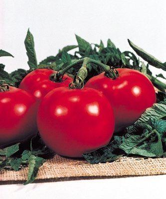 Томат Президент F1 семена томата полудетерминантного (Seminis / Семинис) ПРЕЗИДЕНТ_F1__President_II__семена_овощей_оптом.jpg