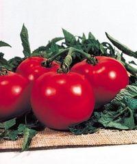Президент F1 семена томата полудетерминантного (Seminis / Семинис)