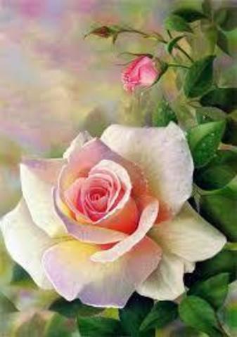 Картина раскраска по номерам 30x40 Цветение розы