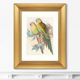 Джон Гульд - Репродукция картины в раме Love parrots, 1850г.