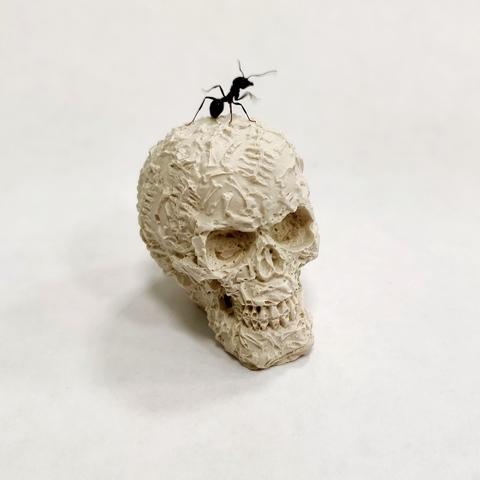 Череп декоративный для муравьиной фермы
