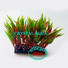 Растение Атман H-166A, 10см