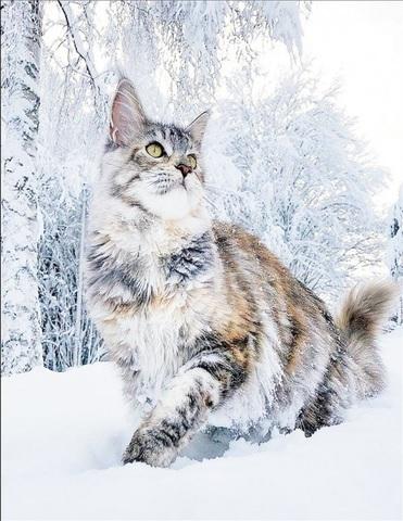 Алмазная Мозаика 40x50 Кошка крадется по снегу (арт. SGA2326 )