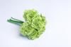 Зелёная гвоздика.