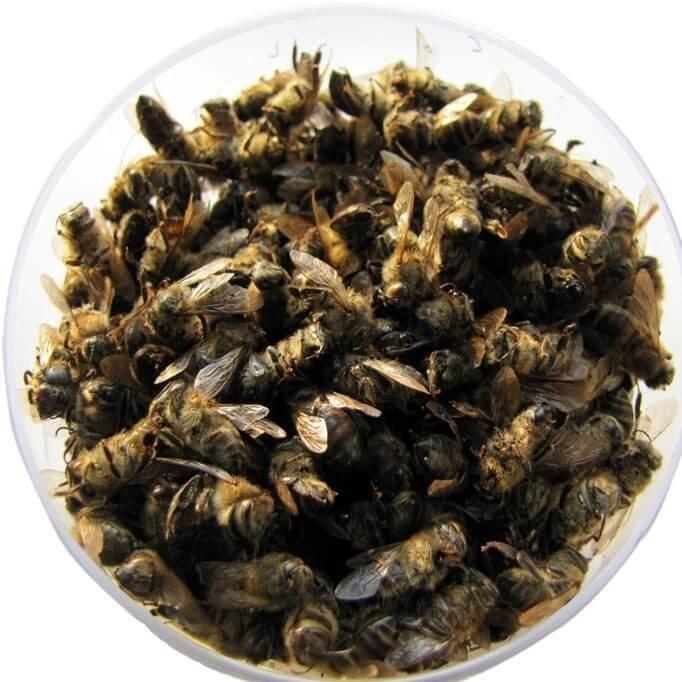 Пчёлы Подмор пчелиный bee-podmor-01.jpg