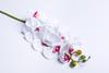 Бело-малиновая орхидея.