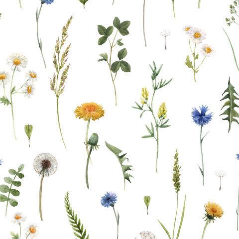 Одуванчик, василек и травы.