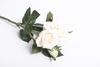 Кремовая роза.