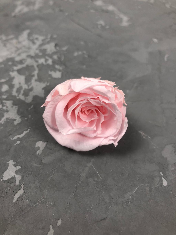 Роза классическая ярко-розовая d=3-3,5 см