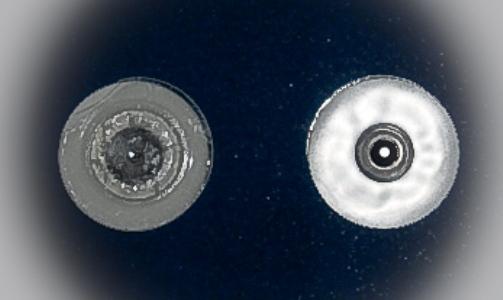 Неонатальный электрод ЭКГ 26мм, одноразовый, PG-10C/RU26, Fiab