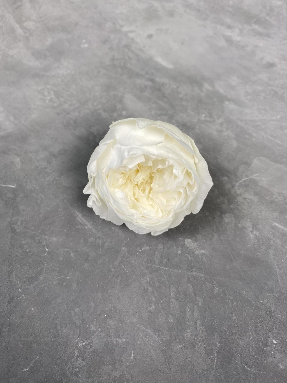 Роза пионовидная молочная d=4,5 см