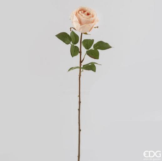 Роза кремово-розовая