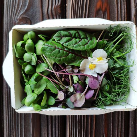 Фотография Микс из микрозелени (лоток) / 50 гр купить в магазине Афлора