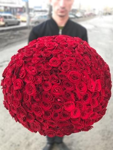 201 красная роза #2105