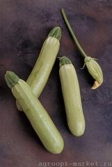 Аймаран F1 семена кабачка (Nunhems / Нюнемс)