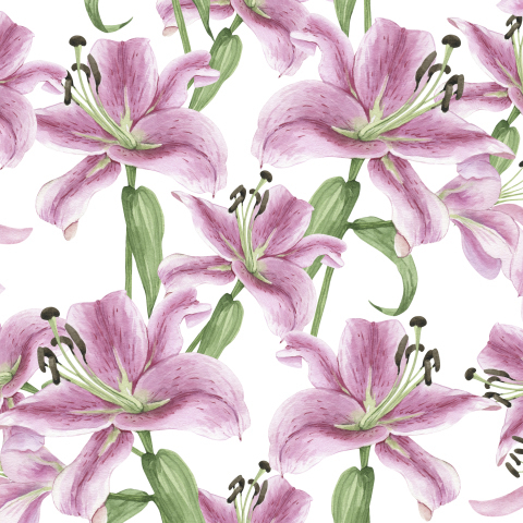 розовые лилии на белом фоне