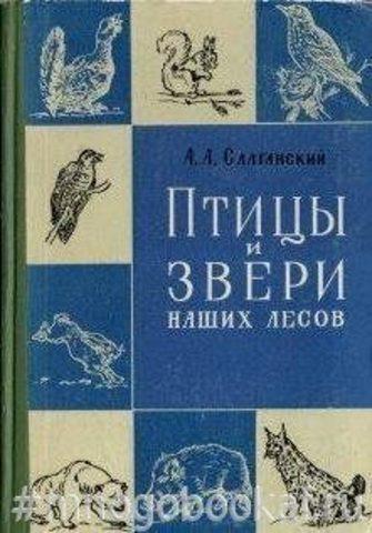 Птицы и звери наших лесов