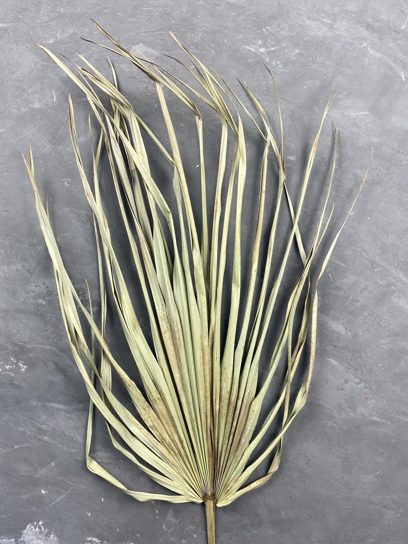 Лист пальмы натуральный