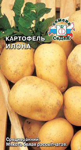 Семена Картофель Илона