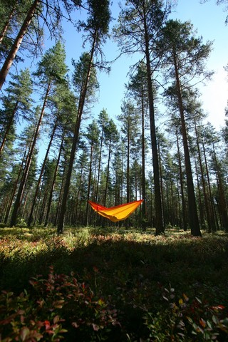 Одинокий гамак в лесу.