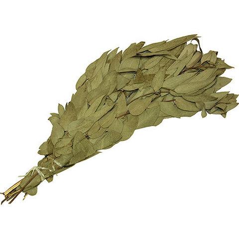 Веник из эвкалипта серебристого