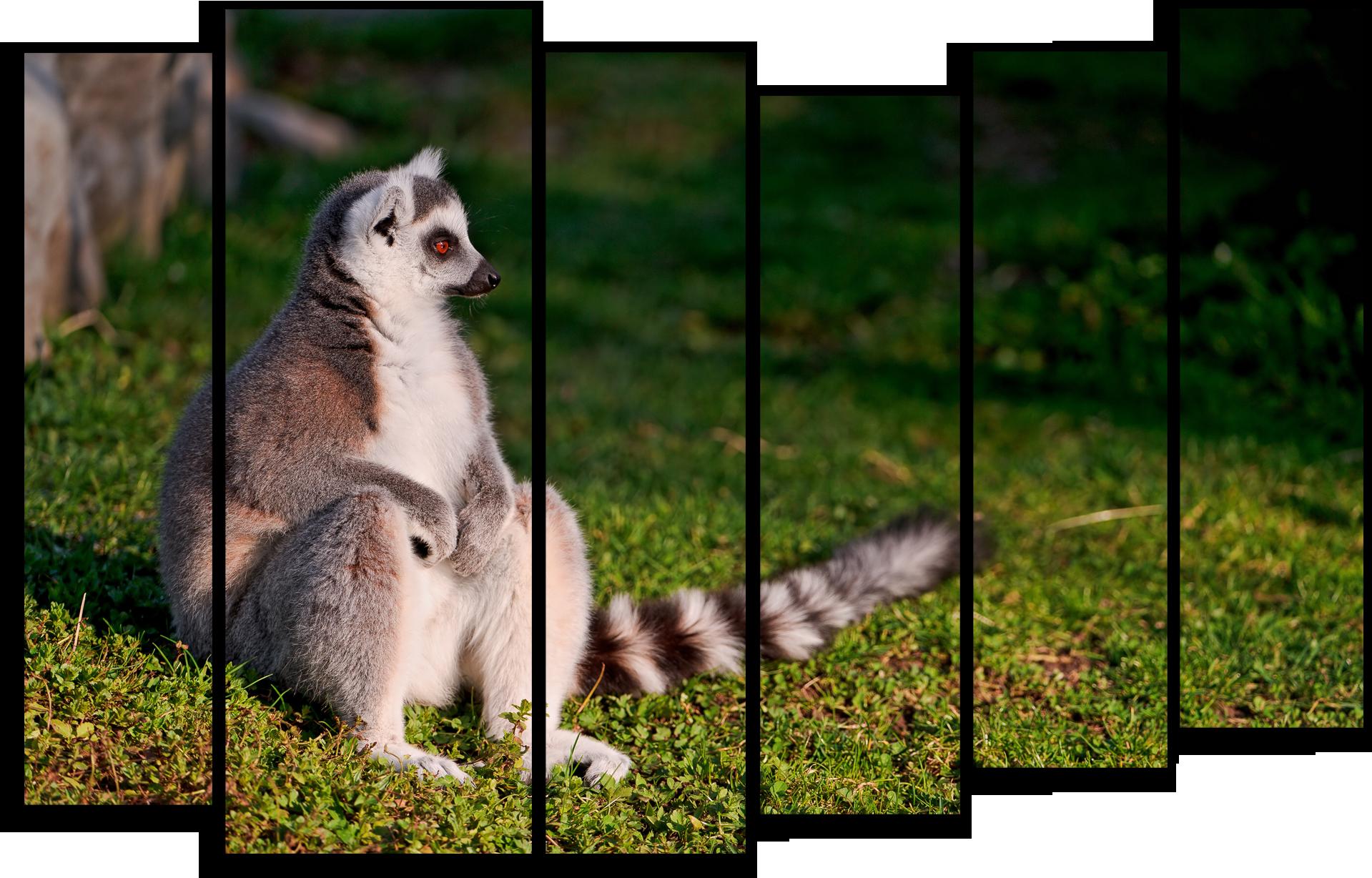 """Животные Модульная картина """"Прекрасный лемур"""" М431.png"""