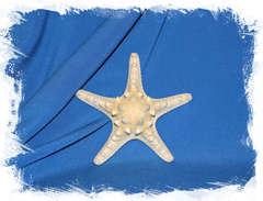 Морская звезда для декора