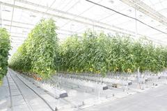 Растения в минеральной вате