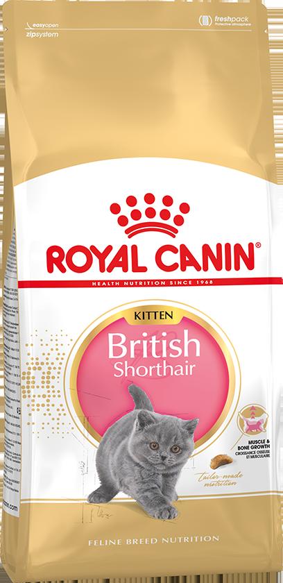 Сухой корм Корм для котят, Royal Canin British Shorthair Kitten, для породы британская короткошерстная в возрасте от 4 до 12 месяцев britishshorthairkitten.png