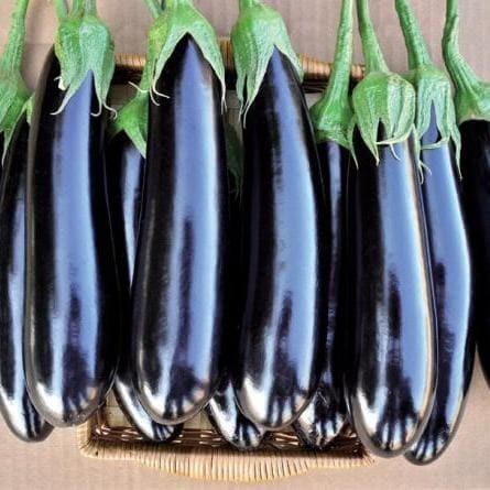 Каталог Фаворит F1 семена баклажана (Vilmorin / Вильморин) Баклажан_Фаворит.jpg