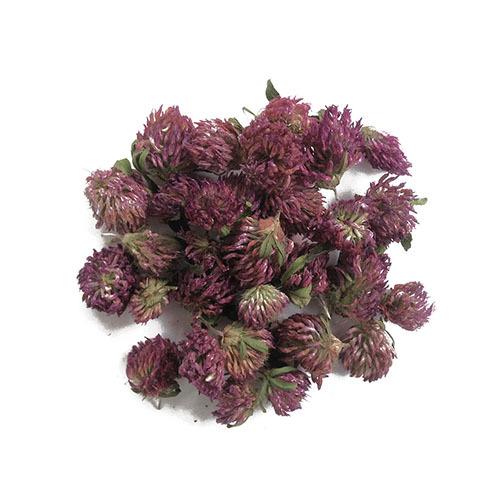 Травы Клевер, цвет trifolium-314.jpg
