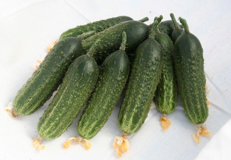 Гавриш Аванс F1 семена огурца партенокарпического (Гавриш) Аванс_семена_овощей_оптом.jpeg