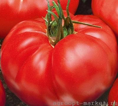 Nunhems Елинора F1 семена томата индетерминантного (Nunhems / Нюнемс) елинора.jpg