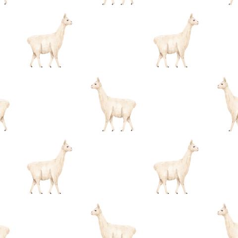 Ламы на белом