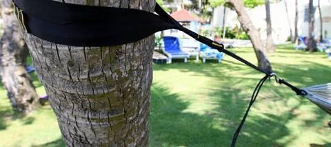 На дереве закреплена веревка для гамака.