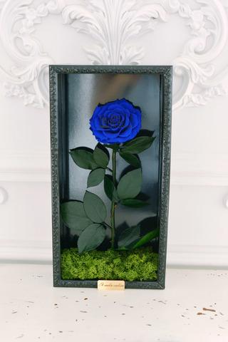 Стабилизированная Роза в Картине Premium Оптом Размер*Бутон (44х22х8см*11см) Цвет синий