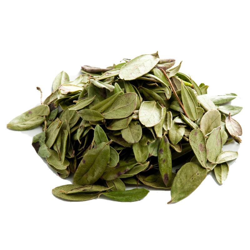 Травы Брусника, лист lingonberry-leaf-03.jpg