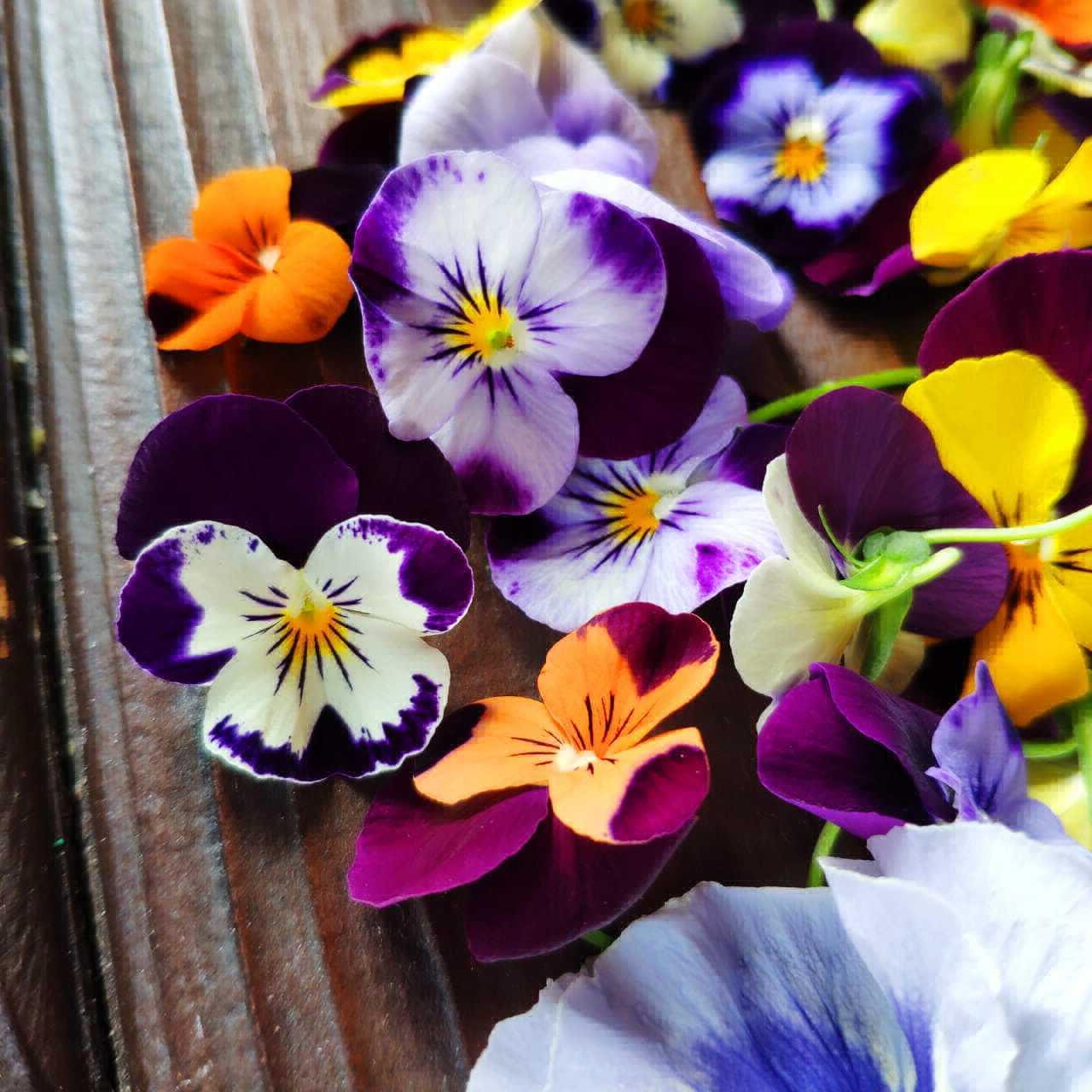 Фотография Виола (анютины глазки), цветы / 15 шт купить в магазине Афлора
