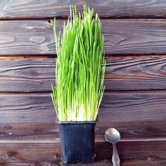Ростки пшеницы (витграс) на корне / 100 гр